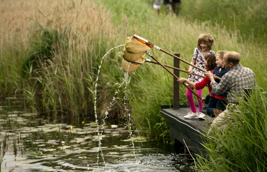 Visitors pond-dipping at Wicken Fen National Nature Reserve, Cambridgeshire.